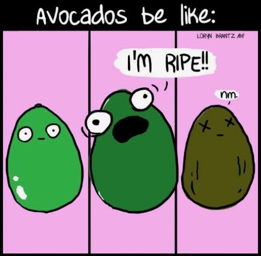 Avocado window meme - Cocolife Australia lifestyle, avocado